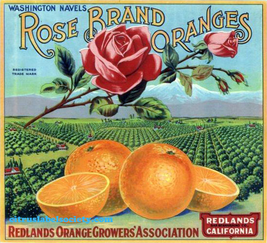 Redlands Rose Brand Oranges